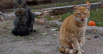 Paterna inicia control de gatos en barrios